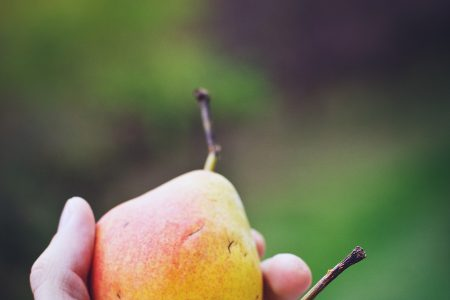 Hand holding pears