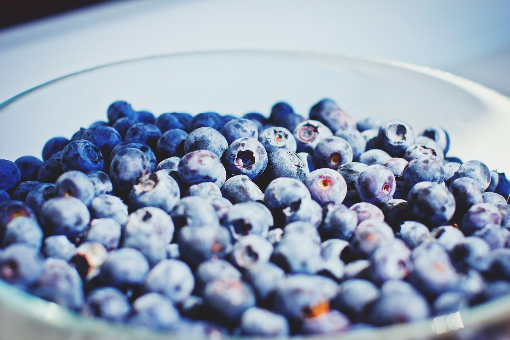 Wild blueberries - free stock photo