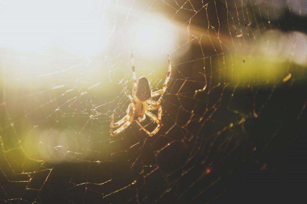 Spider - free stock photo