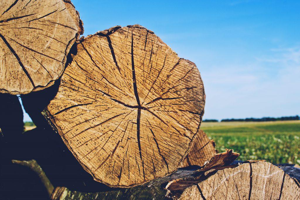 Wood - free stock photo