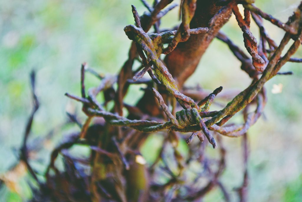 Rusty barbed wire - free stock photo