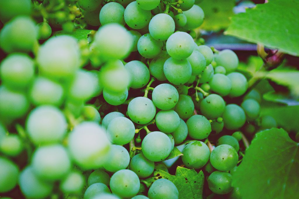 Green Grapes - free stock photo