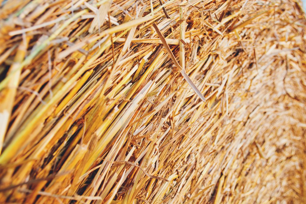 Haystack - free stock photo