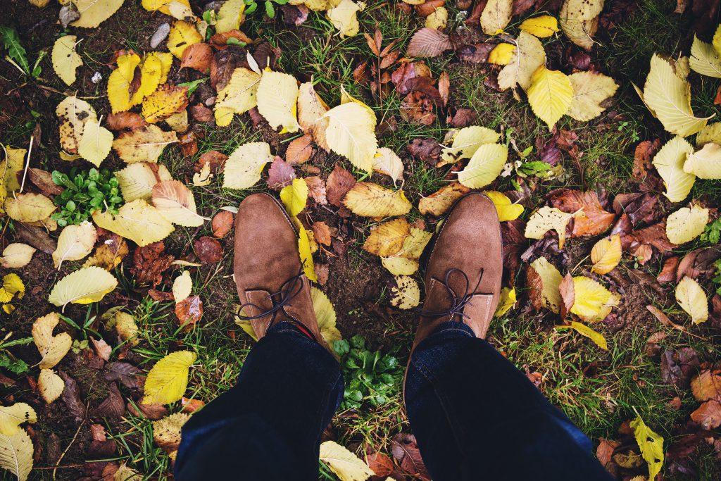 Autumn - free stock photo