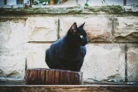 Black cat - free stock photo