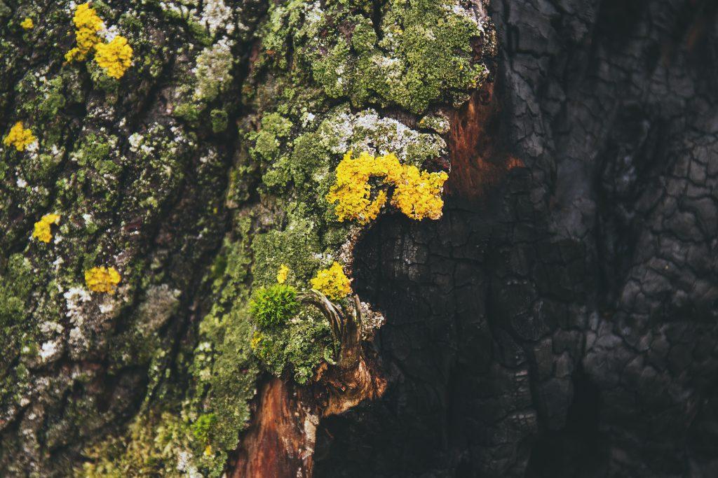 Burnt tree - free stock photo
