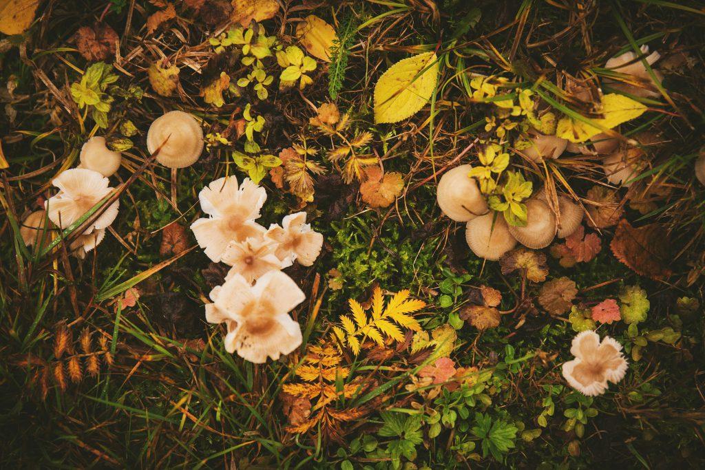 Mushrooms - free stock photo