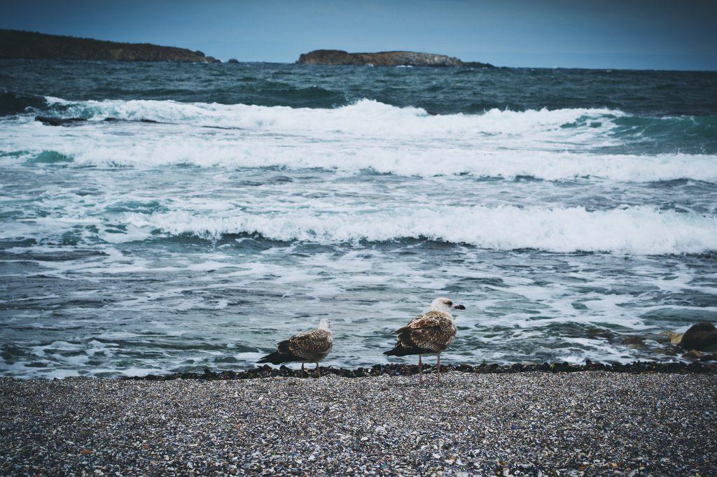 Seagulls - free stock photo