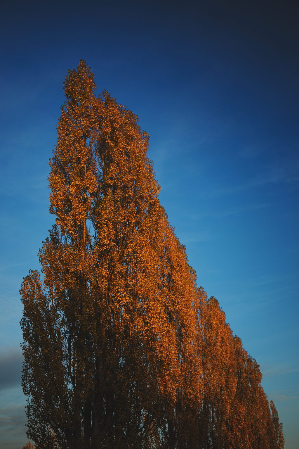 Yellow trees - free stock photo