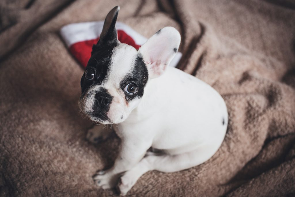 Is this Christmas yet? - free stock photo