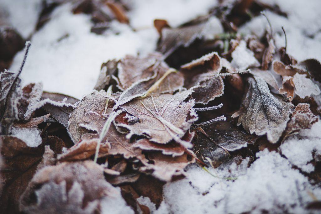 Frozen leaves - free stock photo