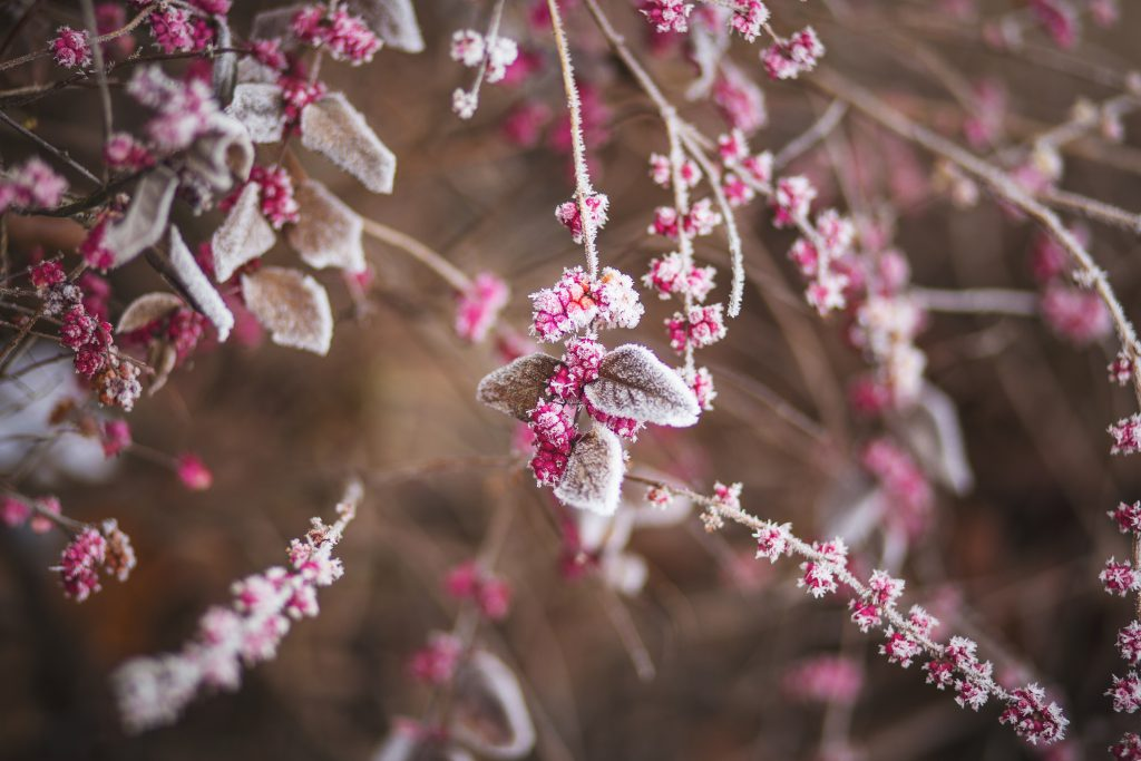 Winter frost 2 - free stock photo