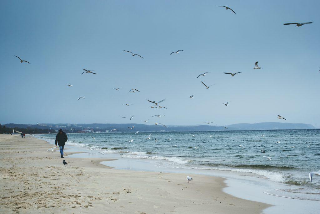 Baltic Sea - free stock photo