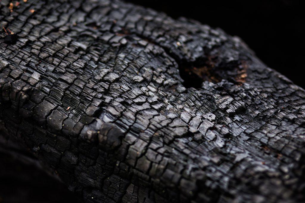 Burnt trunk - free stock photo