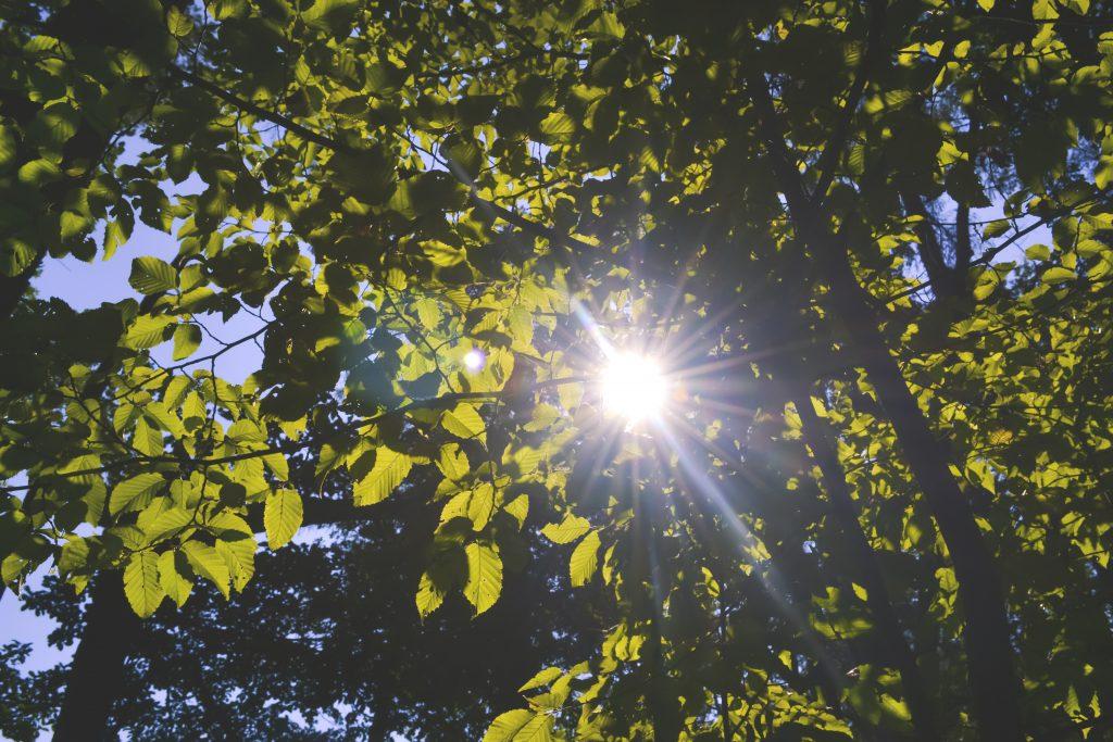 Sun shining through the leaves - free stock photo