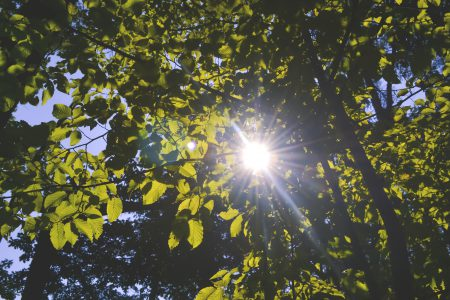 Sun shining through the leaves