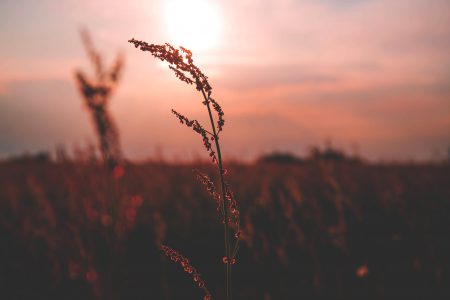Meadow during sunset - free stock photo
