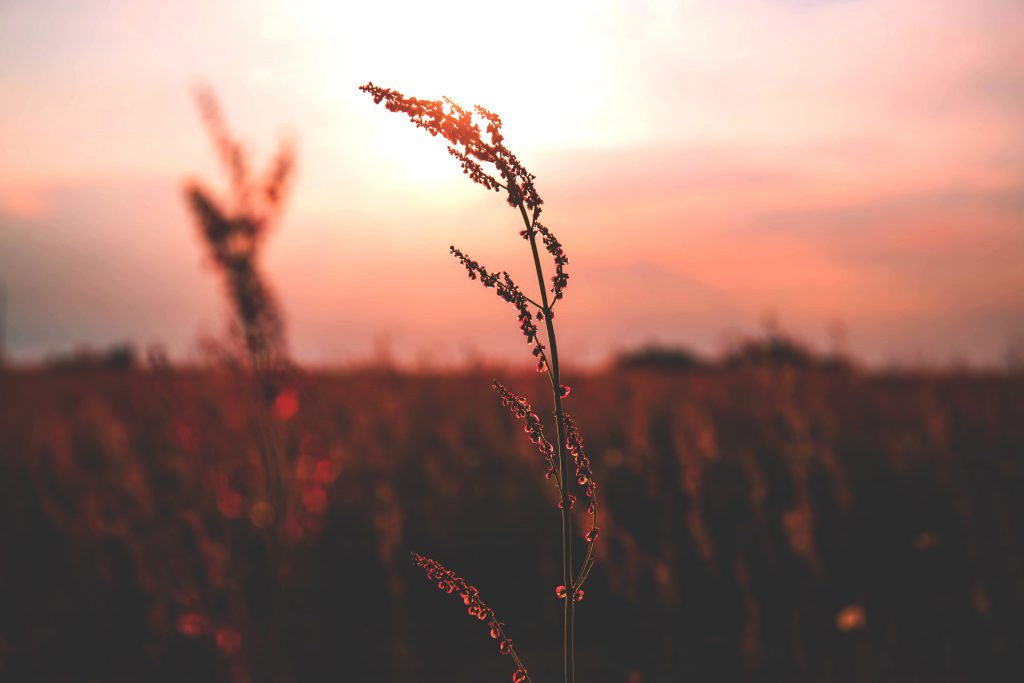 Meadow during sunset 2 - free stock photo