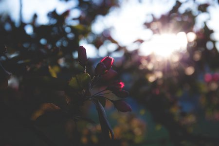 Red flowers in sunlight - free stock photo