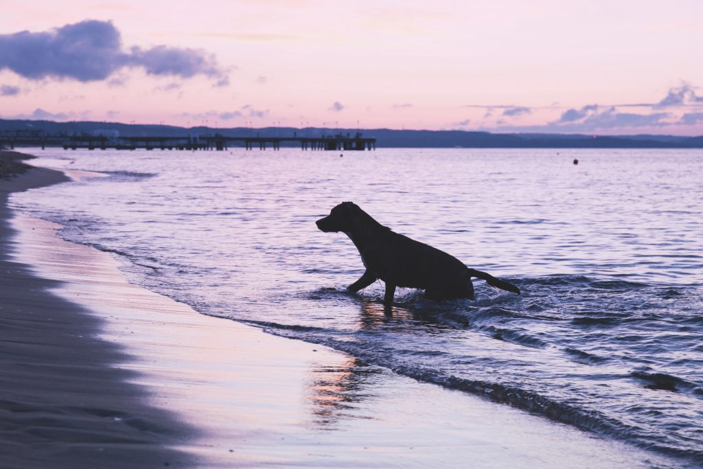 Dog playing in the sea - free stock photo
