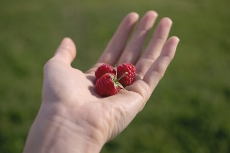 Hand with raspberries - free stock photo