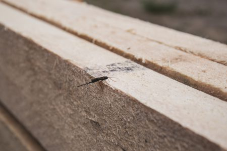 Insect on wooden board