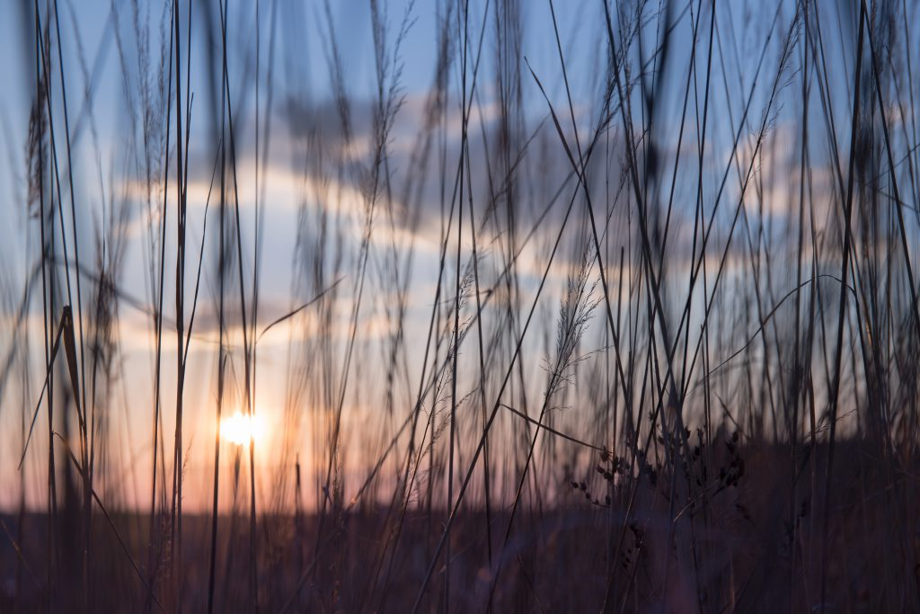 Low sun in the high grass - free stock photo
