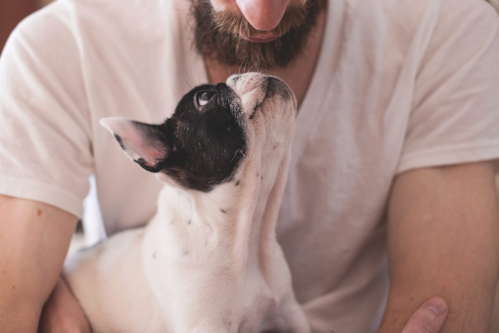 Man with a puppy - free stock photo