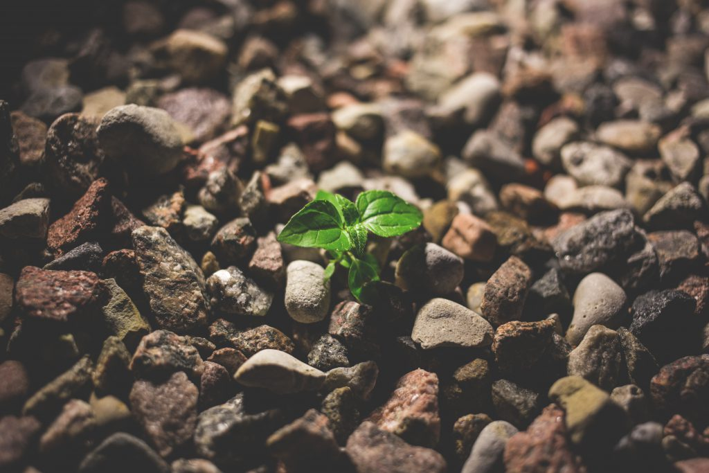 Plant growing between the rocks - free stock photo