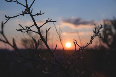 Spring sunset - free stock photo
