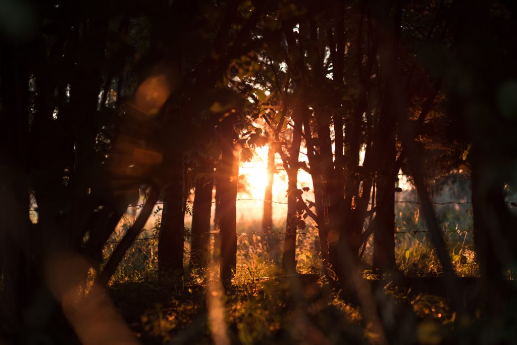 Sunset in forest - free stock photo