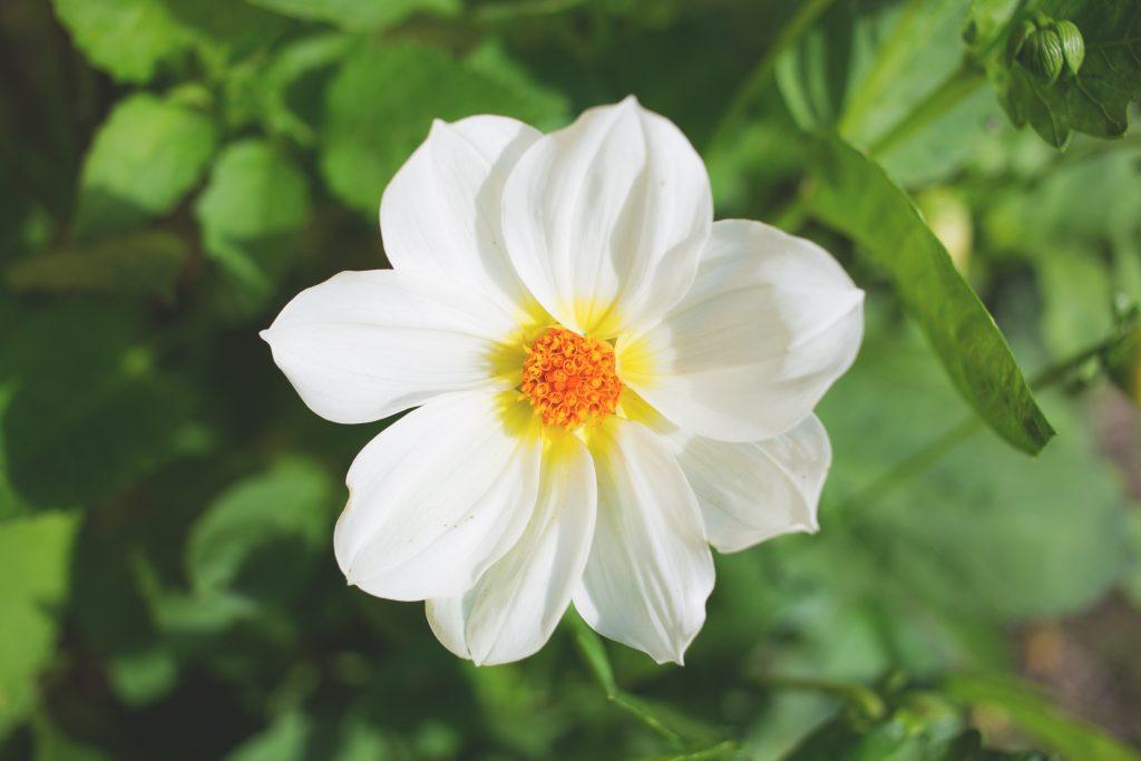 White flower - free stock photo