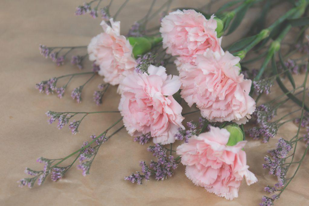 Cut flowers - free stock photo