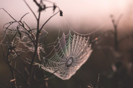 Dew on a spider's web - free stock photo
