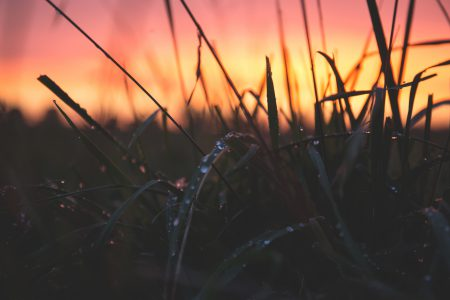 Dew on grass in the sunset