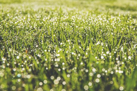 Dew on the grass - free stock photo