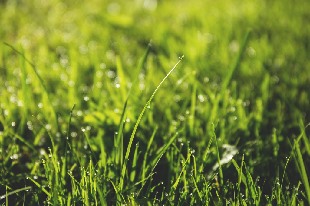 Dew on the grass 2 - free stock photo
