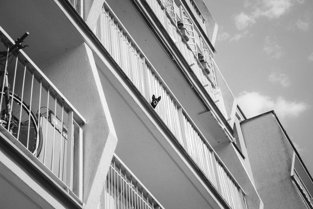 Dog on a balcony - free stock photo