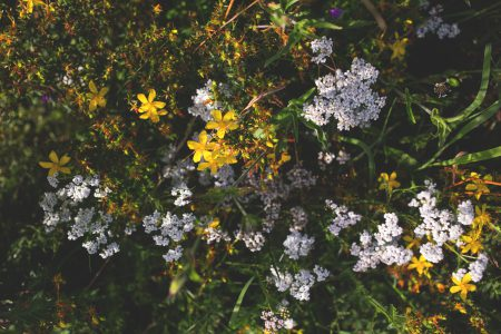 Meadow flowers - free stock photo
