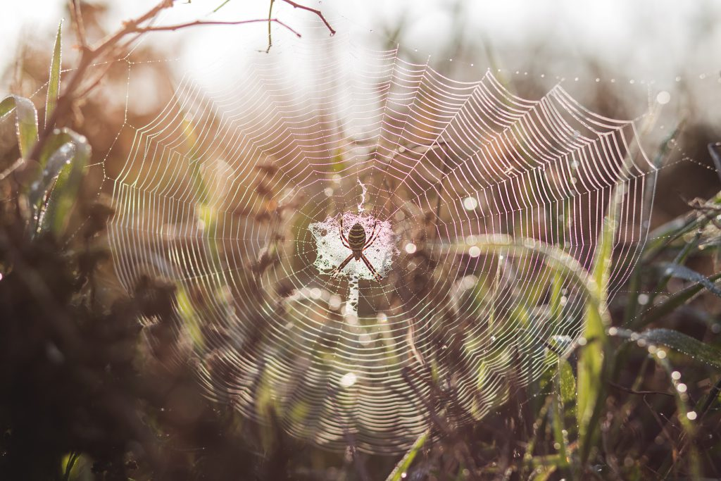 Spider on its web - free stock photo
