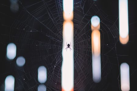 Spider's web - free stock photo
