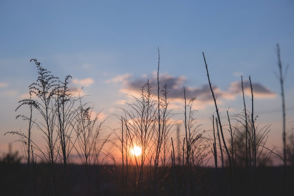 Spring sunset 2 - free stock photo
