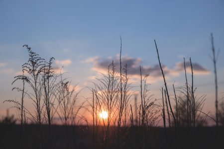 Spring sunset 2 - free stock photo
