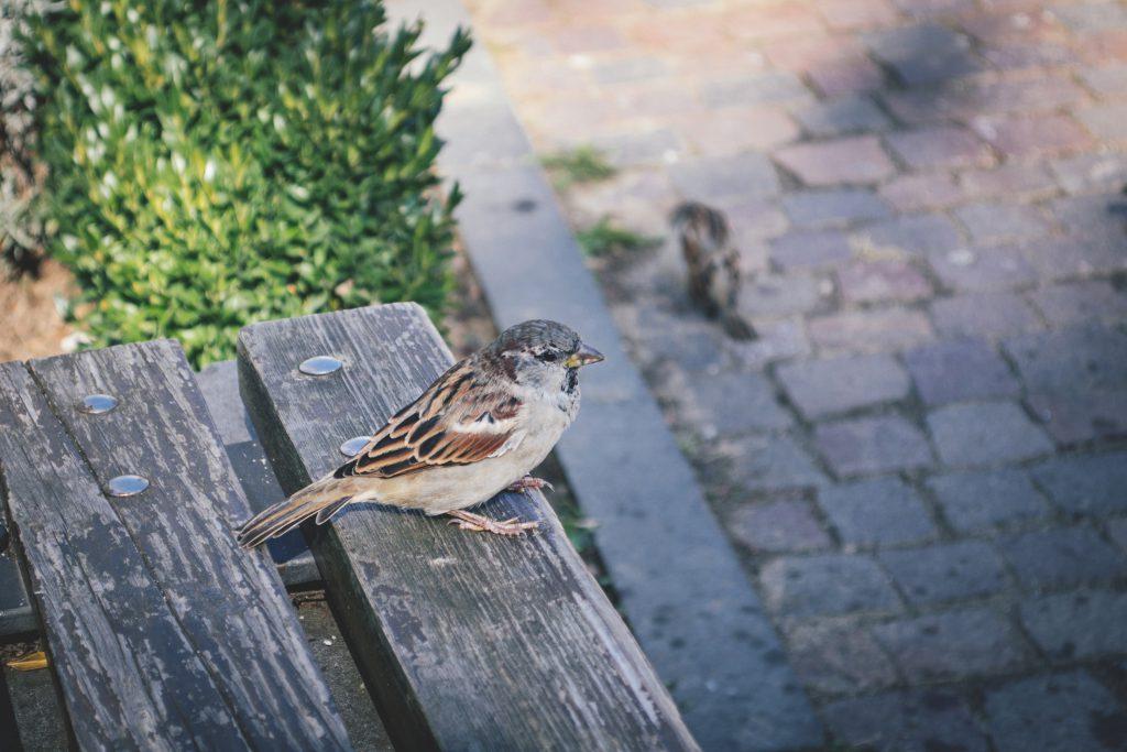 Bird on a bench - free stock photo