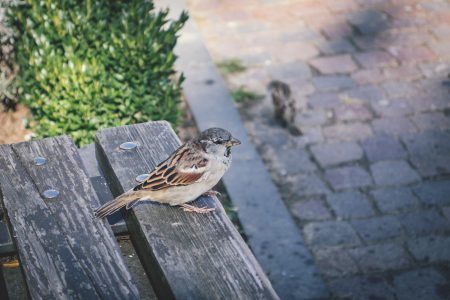 Bird on a bench - free stock photo