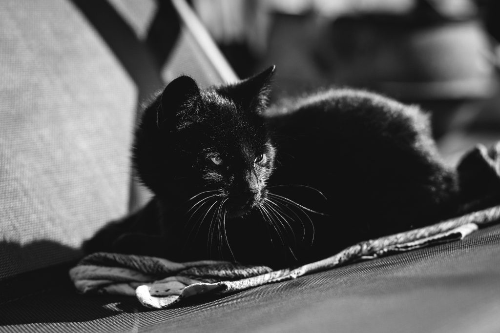Black cat 2 - free stock photo