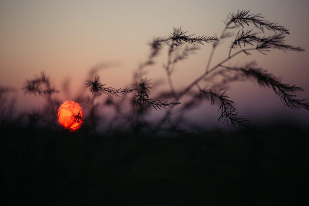 Blurry sunset 2 - free stock photo