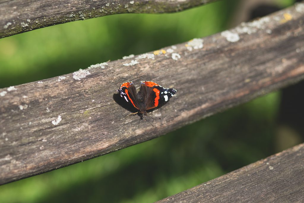 Butterfly on a bench - free stock photo