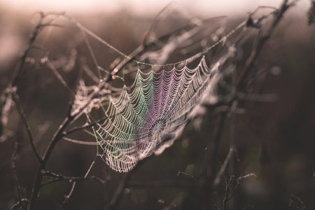 Dew on a spider's web 2 - free stock photo