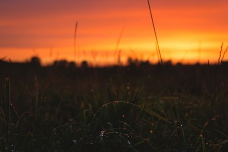 Dew on grass in the sunset 2 - free stock photo